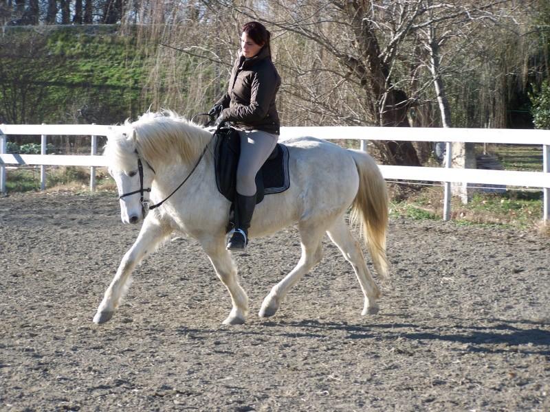 cheval dressage a vendre