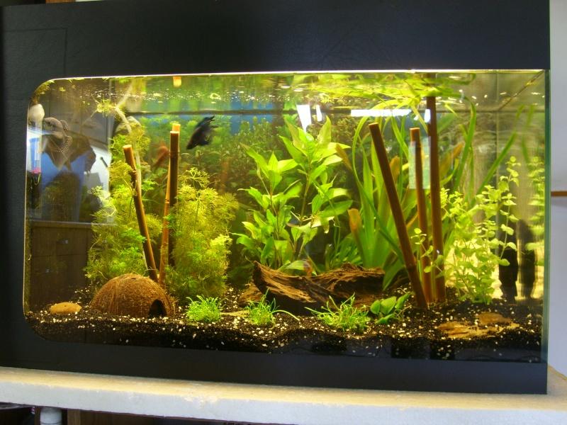 décor aquarium amazonien