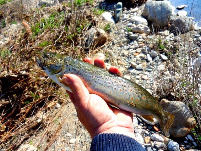 Une belle pêche par JP