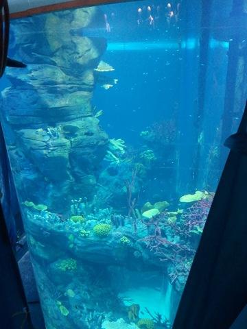 l aquarium du morocco mall