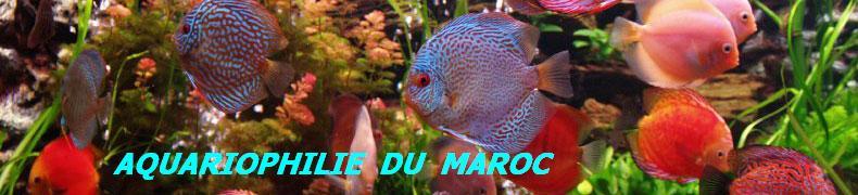 Forum d'Aquariophile Marocain