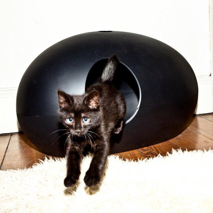 une lliti re pour chat design page 2. Black Bedroom Furniture Sets. Home Design Ideas