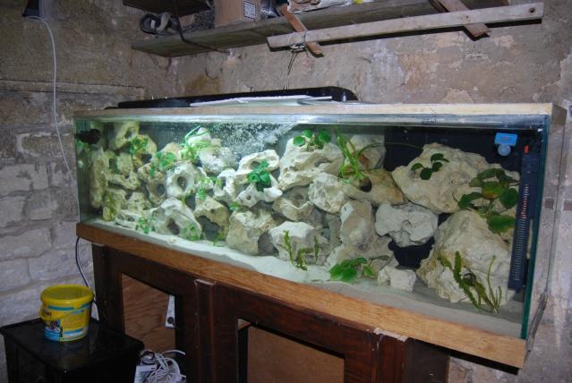 Mon 600l mbunas pr sentations de votre vos aquarium s for Aquarium 600l