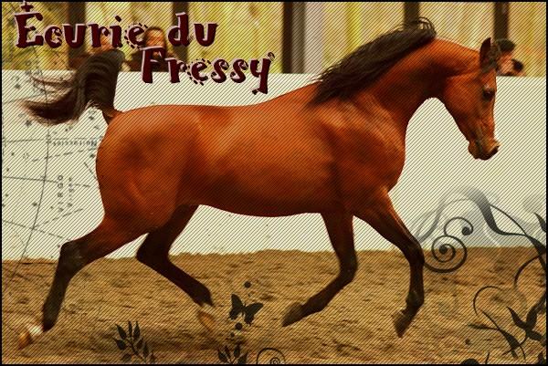 Ecurie du Fressy
