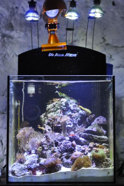 Nouveau nano 36 litres aquarium r cifal aquarium marin for Aquarium nano marin