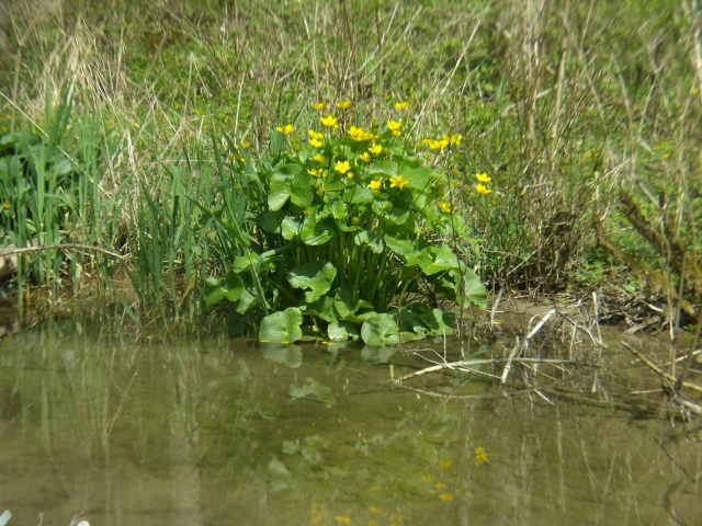 Plantes de bassin ext rieur trouvez le meilleur prix sur for Plante bassin exterieur