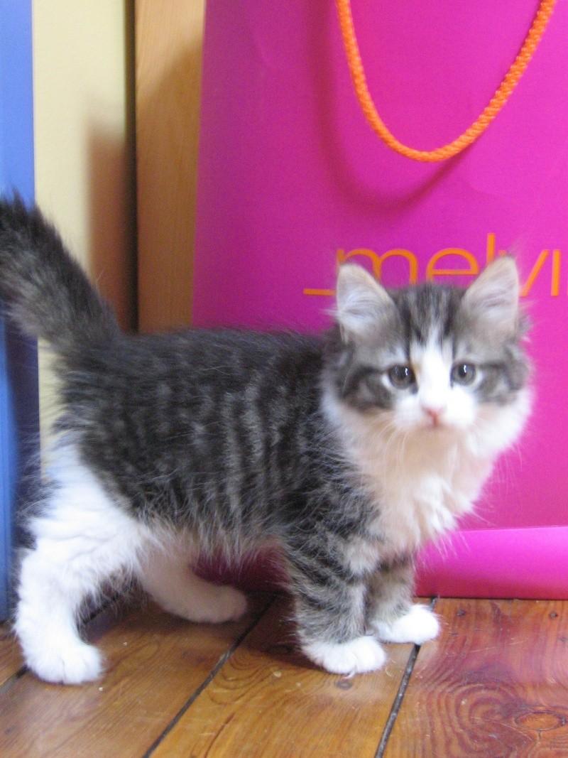Nouvelle amoureuse des chats - Salon bebe charleroi ...