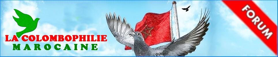Pigeon maroc, Forum Maroc
