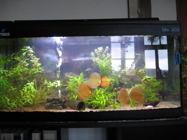 Aquarium 200l discus images for Aquarium 200l