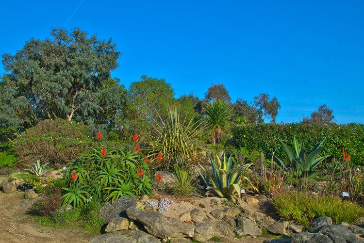 Sublime jardin exotique roscoff en bretagne du nord for Plante exotique exterieur