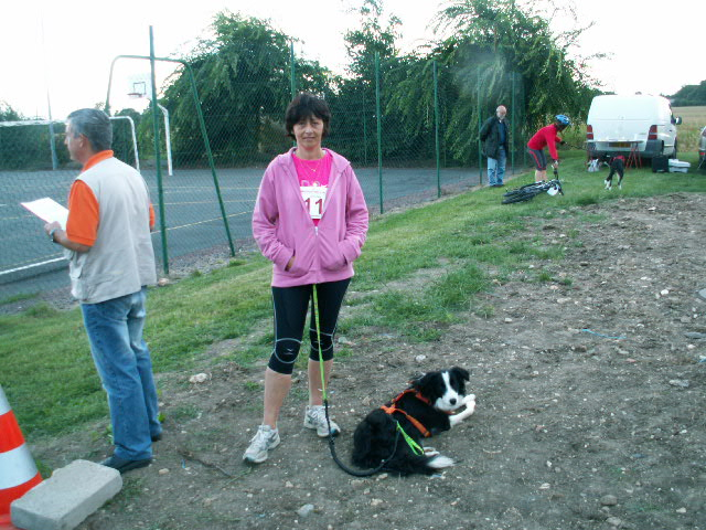 canicross border collie