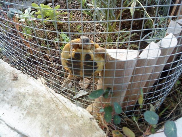 grillage pour enclos tortue