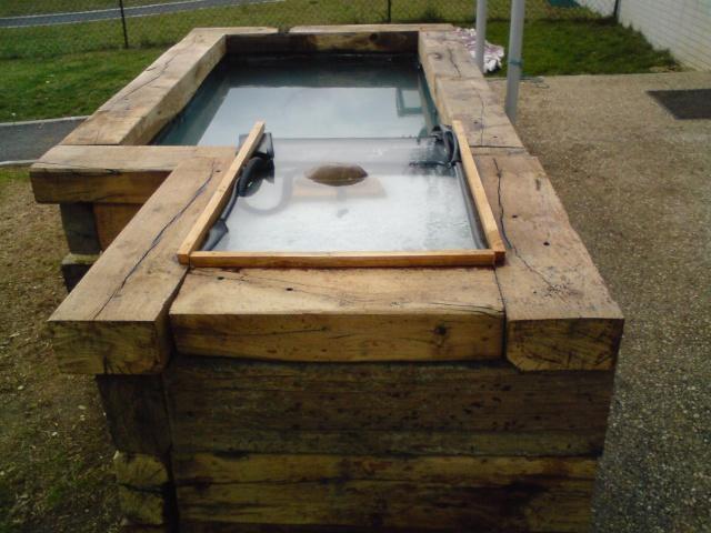 Notre bassin ext rieur for Poisson rouge en bassin exterieur
