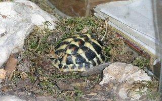 sujet de dissertation sur la famille tortue
