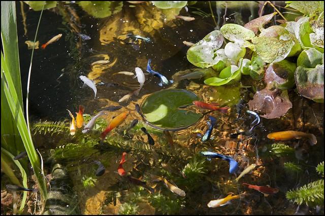 Ecrevisse dans 60l les invert 28 images mon 60l vos for Bassin poisson exterieur