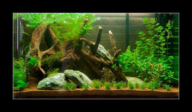 Ajout d 39 une rampe d 39 clairage sur osaka 260 for Aquarium osaka 260