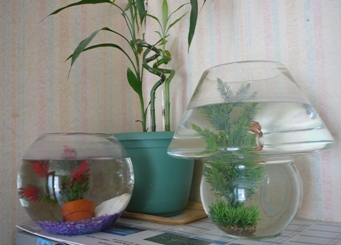 Voila tous mes aquariums for Petit aquarium boule