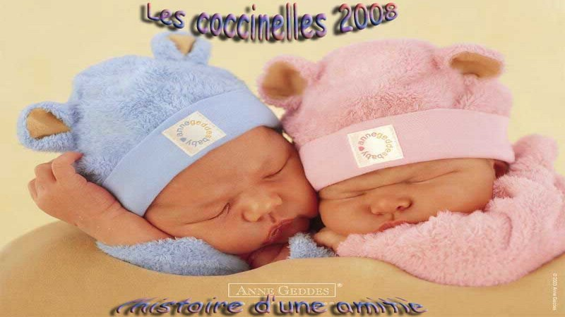 LES COCCINELLES 2008