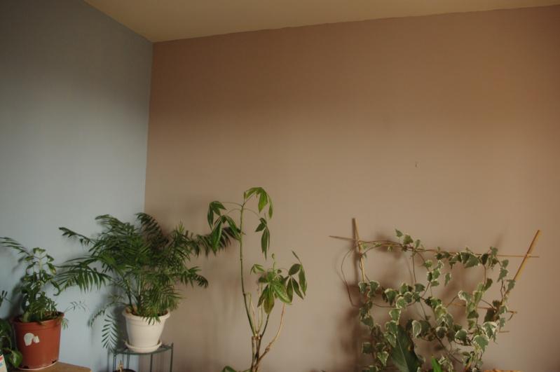 Peinture carrelage julien marron glac 20171018183720 - Marron glace couleur peinture ...