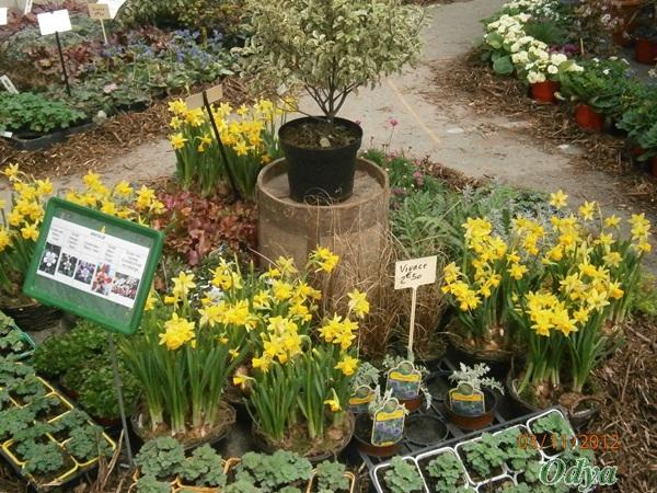 Salon printemps au jardin niort 79 page 2 for Jardin royal niort