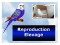 Reproduction - Elevage