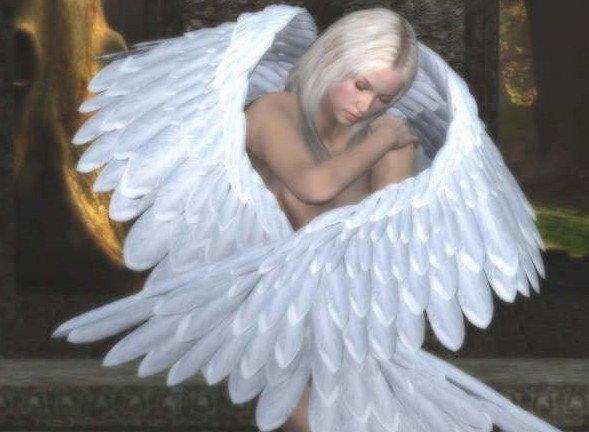 ange10 dans fond ecran ange