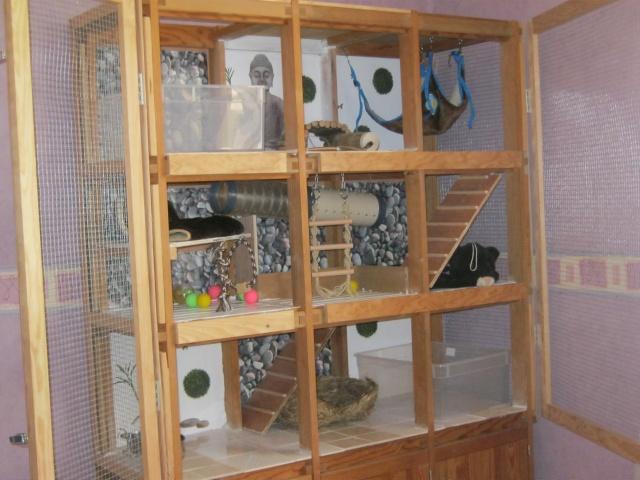 passionnement furets forum furet vison mustelides afficher le sujet notre cage pas pas. Black Bedroom Furniture Sets. Home Design Ideas