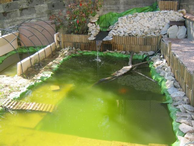 Bassin ext rieur de 1000l pour ma chouka page 2 - Bassin tortue floride strasbourg ...