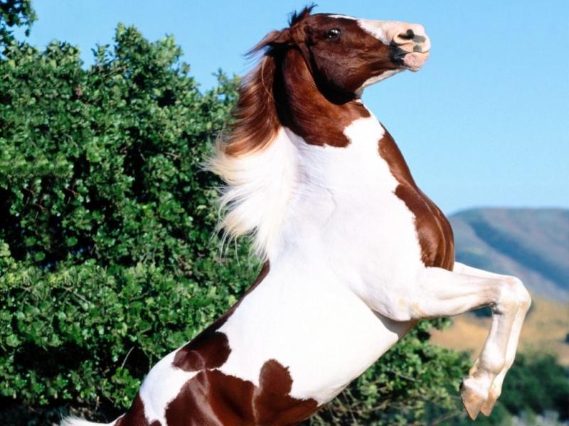 خيول غريبة الشكل 776ecf10.jpg