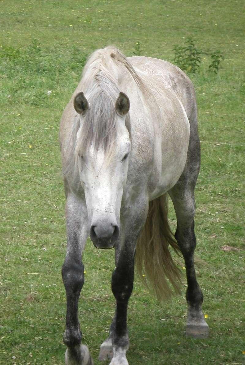 Top Acheter un cheval Archives - Univers du cheval IE11