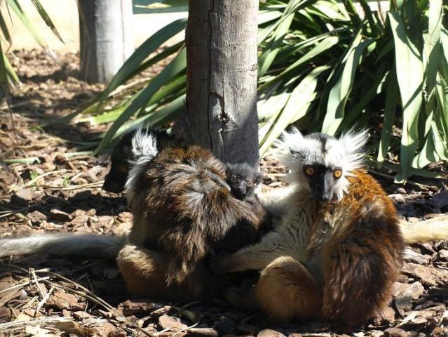 Derni res nouvelles du jardin zoologique tropical la for Jardin zoologique tropical