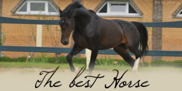 The best Horse