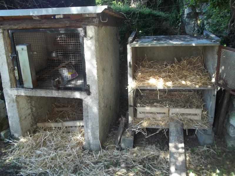 Votre avis sur mon installation et sur la race de mes poules - Fabriquer abreuvoir poule ...